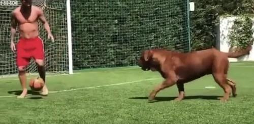 Messi's Dog